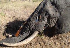 2G_zimbawe_hunting-knife_3.jpg