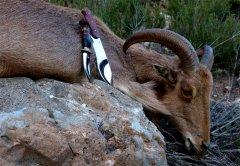 scagel_2G_Jagdmesser_Hunting-knife_35.jpg